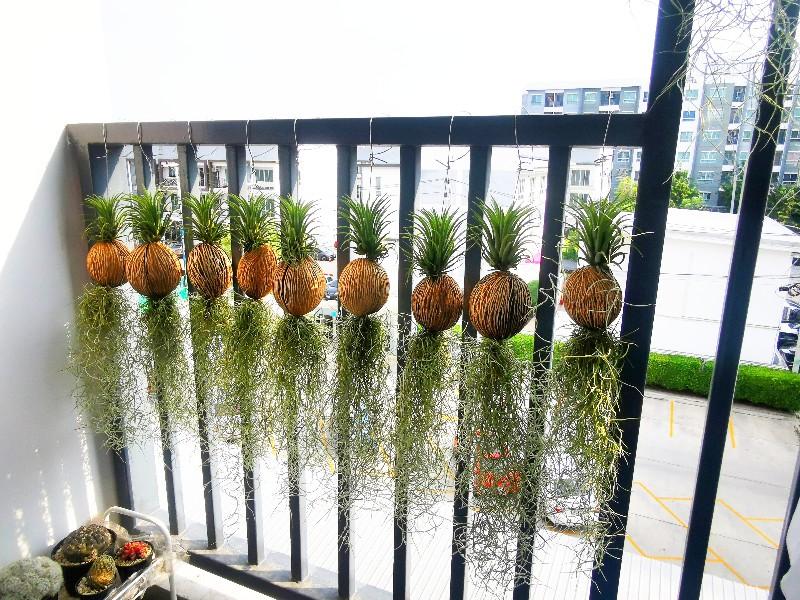 จัดสวนระเบียงคอนโด แบบพืชไร้น้ำ