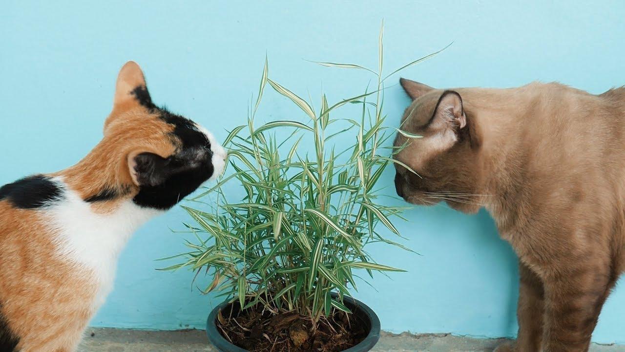 แนะนำ ต้นไม้แมวกินได้ สามารถปลูกได้ ในบ้านที่เลี้ยงเจ้าเหมียว