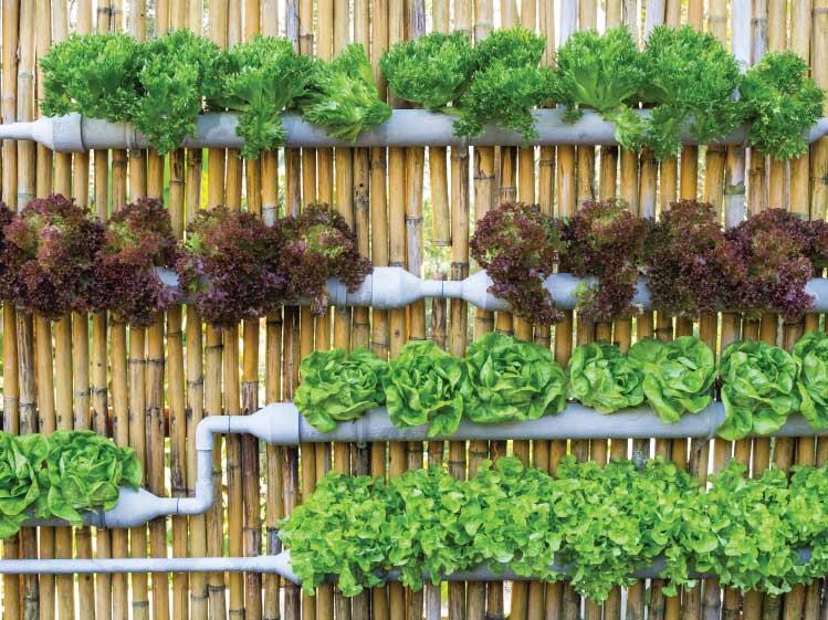 ใช้ท่อ PVC ปลูกต้นไม้  เรียกได้ว่าเป็นอีกหนึ่งไอเดียของ การจัดสวนแนวตั้ง