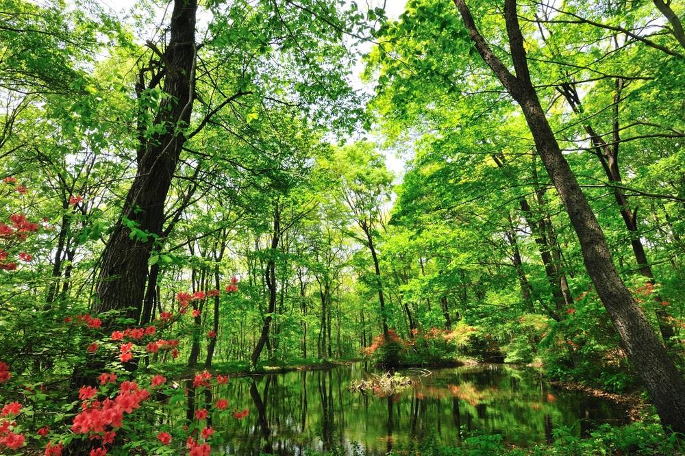 สวนป่าธรรมชาติ – สไตล์การแต่งสวน สำหรับ นักแต่งสวนมือใหม่ ทางเลือกในการวางแผนก่อนแต่งสวน