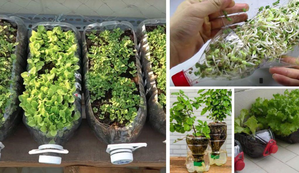 ปลูกพืชผักในคอนโด ในขวดพลาสติกที่ใช้แล้ว