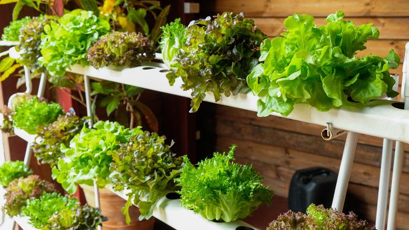 ปลูกพืชผักในคอนโด แบบแนวตั้ง