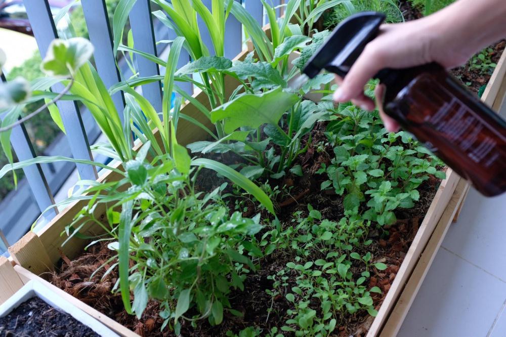 ปลูกพืชผักในคอนโด ในกระถางแนวยาว