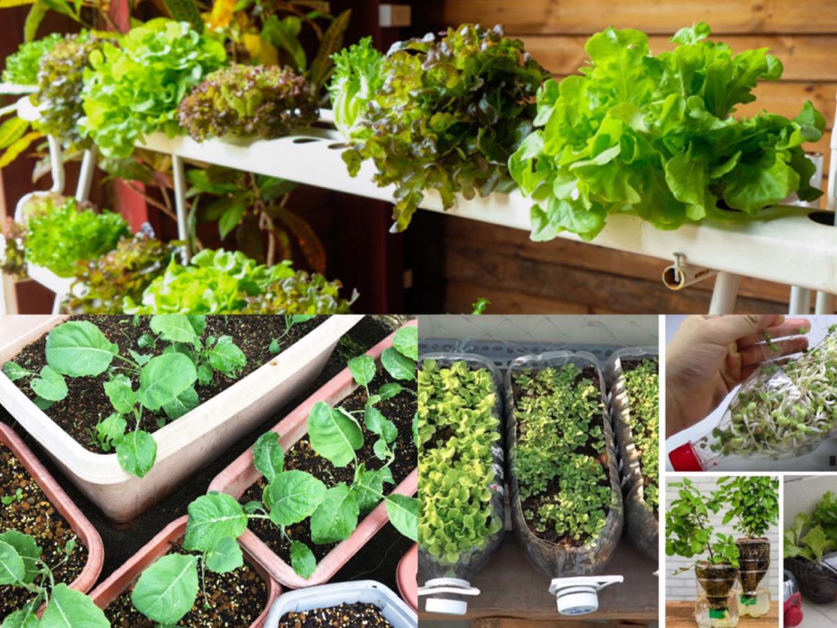 แนะนำ วิธีปลูกพืชผักในคอนโด มีพื้นที่จำกัด ก็สามารถปลูกได้