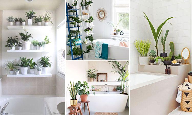 พื้นที่สีเขียวภายในบ้าน ในบริเวณห้องน้ำ