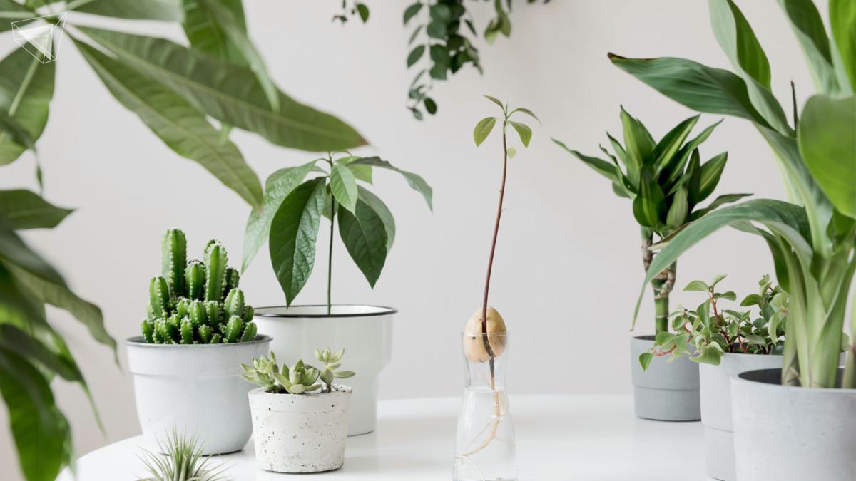 ต้นไม้สรรพคุณดี ปลูกบริเวณบ้าน ได้ทั้งความสวยงาม และประโยชน์ดีๆ ที่ตามมา