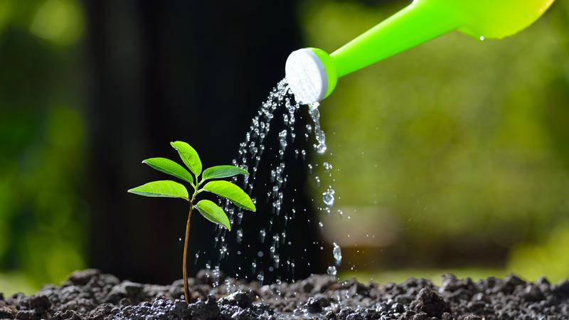 ต้นไม้สรรพคุณดี เป็นสมุนไพร ให้เรานำมาทำประโยชน์ ได้อีกด้วย