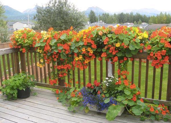 Nature Style การแต่งบ้านสไตล์ธรรมชาติ  ด้วยเถาวัลย์