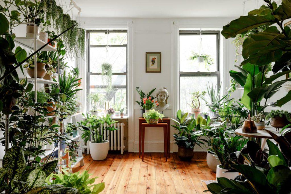 Nature Style การแต่งบ้านสไตล์ธรรมชาติ ด้วยการปลูกต้นไม้ในบ้าน